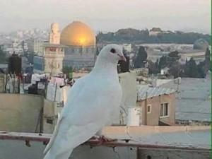 Auspicio per Gerusalemme